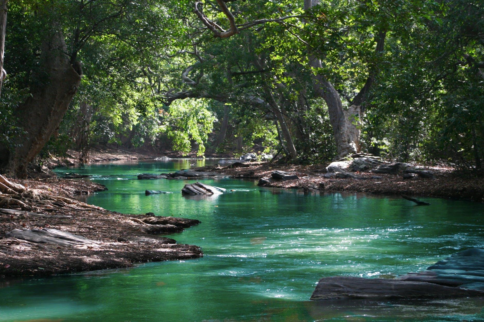 body of water between green leaf trees